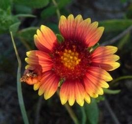 762TX wildflowerKAtyPye-cr-rs