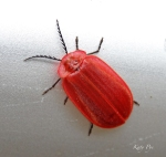 JugHandle bug top1 5452_edited-1