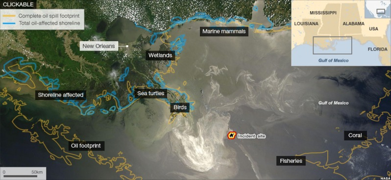 """BBC NEWS Go to article here for the interactive version from: BBC NEWS: """"BP Oil Spill: The Environmental Impact 1 year on"""""""