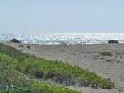 182 WL dune path + morning gloryKP-rs