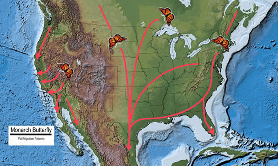 "Fall Migration Map."" Monarch Butterfly. US Forest Service, 3 May 2013. Web. 18 Jan. 2014."