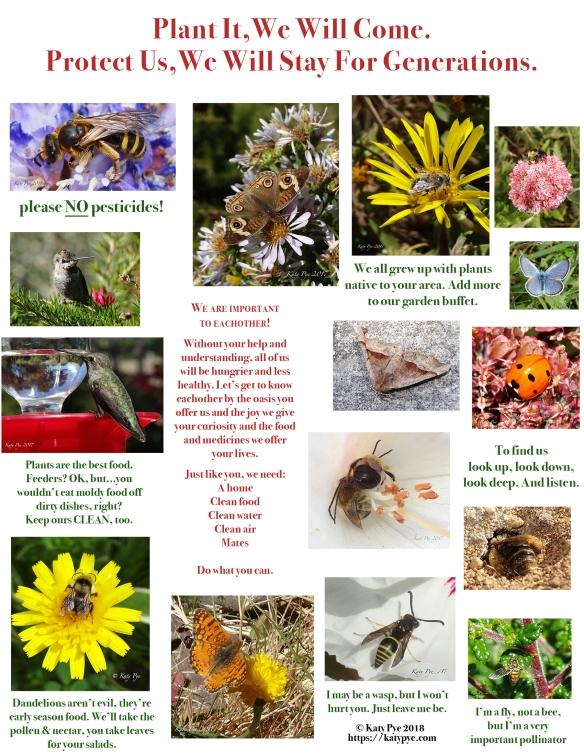 Katy Pye pollinator panel 4-22-18 @200